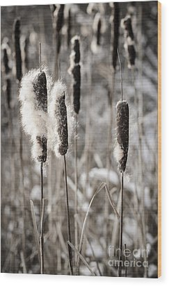Cattails In Winter Wood Print by Elena Elisseeva