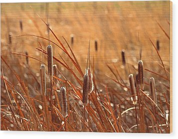 Wood Print featuring the photograph Cattails  by Lynn Hopwood