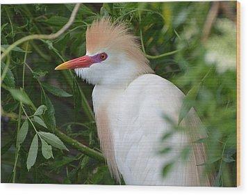Cattle Egret In Breeding Season Wood Print by Jodi Terracina