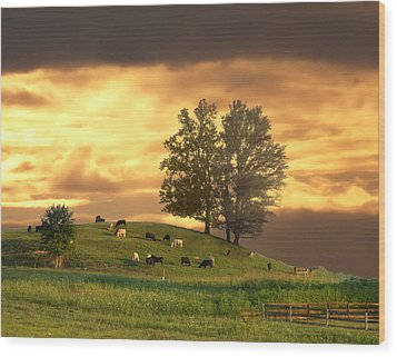 Cattle On A Hill Wood Print