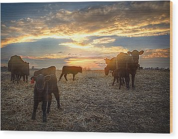 Cattle Sunset 2 Wood Print by Thomas Zimmerman