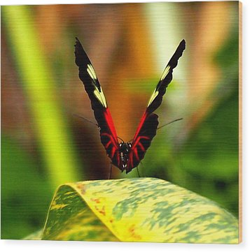 Wood Print featuring the photograph Cattleheart Butterfly  by Amy McDaniel