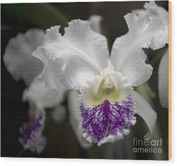 Cattleya Catherine Patterson Full Bloom Wood Print by Terri Winkler