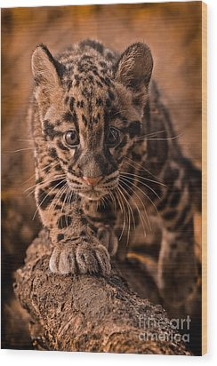Cautious Advance Wood Print by Ashley Vincent