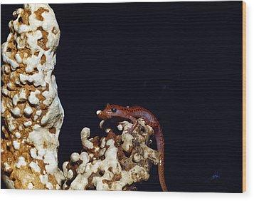 Cave Salamander Wood Print by Charles E. Mohr