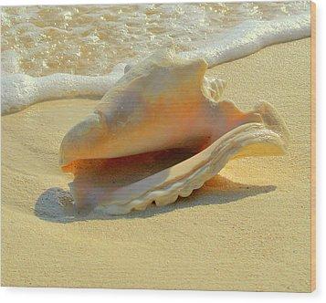 Cayman Conch #1 Wood Print