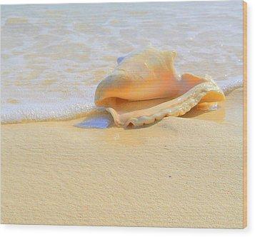 Cayman Conch #2 Wood Print