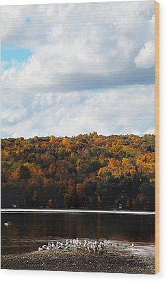 Wood Print featuring the photograph Cayuga Lake In Colorful Fall Ithaca New York  by Paul Ge