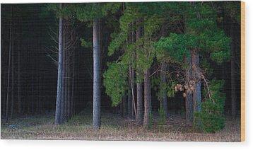 Cedar Wood Print by Tim Nichols