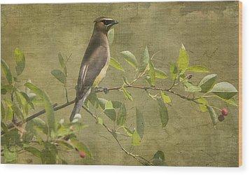 Cedar Waxwing Berry Pickin  Wood Print
