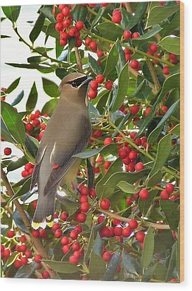 Cedar Waxwing Wood Print by Kelly Nowak