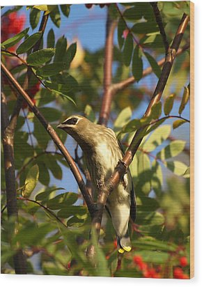 Wood Print featuring the photograph Cedar Waxwing by James Peterson