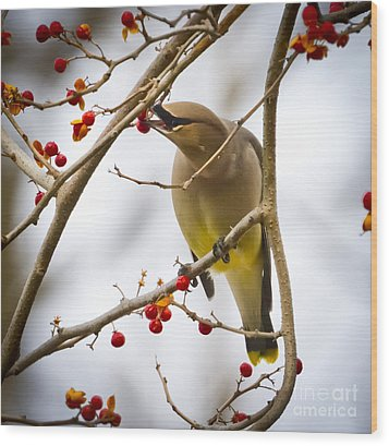 Wood Print featuring the photograph Cedar Waxwing by Ricky L Jones