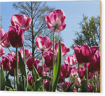 Wood Print featuring the photograph Celebration Of Spring by John Freidenberg