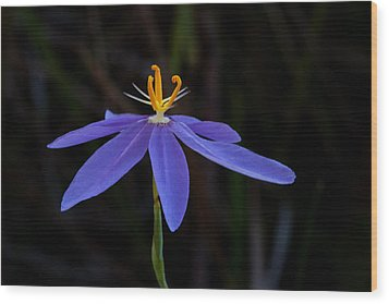 Celestial Lily Wood Print by Paul Rebmann