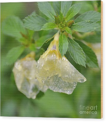 Wood Print featuring the photograph Cellophane Flower- Drenched by Darla Wood