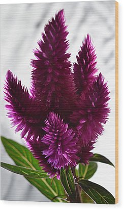 Celosia Wood Print by Terence Davis