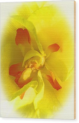 Center Daffodil Wood Print by Tina M Wenger