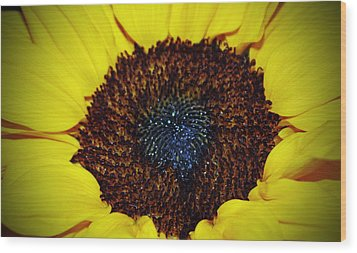Center Of A Sunflower Wood Print by Cynthia Guinn