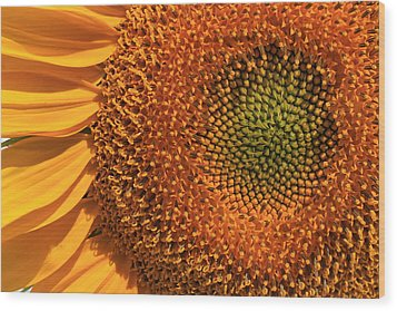 Center Of Attention Wood Print by Donna Kennedy