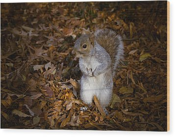 Central Park Squirrel Wood Print by Marta Grabska-Press