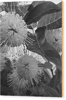 Cephalanthus Occidentalis In Black And White Wood Print