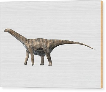 Cetiosaurus Oxoniensis, Middle Jurassic Wood Print by Nobumichi Tamura