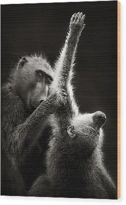 Chacma Baboons Grooming Wood Print by Johan Swanepoel