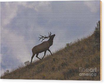Challenge Of The Bull Elk Wood Print by Sandra Bronstein