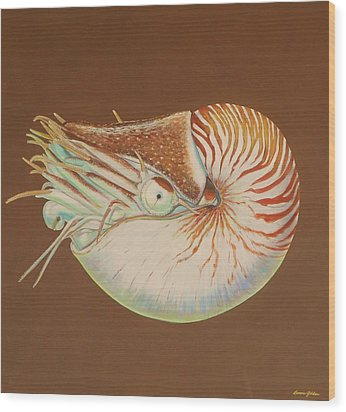 Chambered Nautilus Wood Print by Bonnie Golden