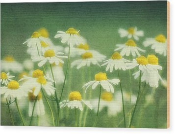 Chamomile Wood Print by Claudia Moeckel