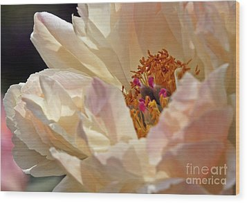 Champagne Peony Wood Print by Lilliana Mendez