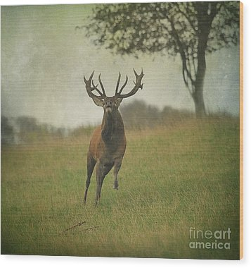 Wood Print featuring the photograph Charging Stag by Roy  McPeak
