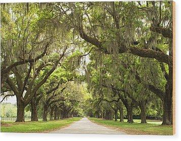 Charleston Avenue Of Oaks Wood Print by Stephanie McDowell