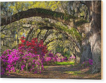 Charleston Sc Spring Azalea Flowers - A Servant's Grace Wood Print
