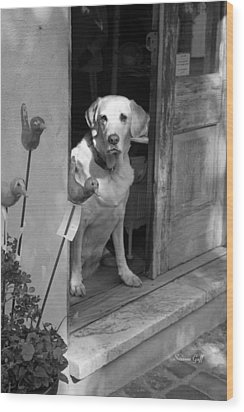 Charleston Shop Dog In Black And White Wood Print by Suzanne Gaff