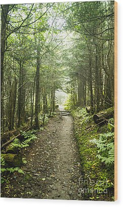 Wood Print featuring the photograph Charlies Bunion Bald Trail by Debbie Green