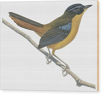 Chat Thrush  Wood Print by Anonymous