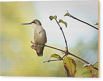 Wood Print featuring the photograph Chatter by Tammy Schneider