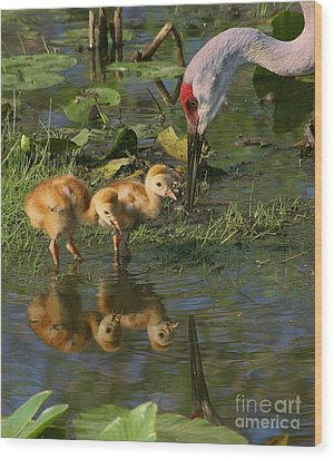 Checking On The Babies Wood Print by Myrna Bradshaw