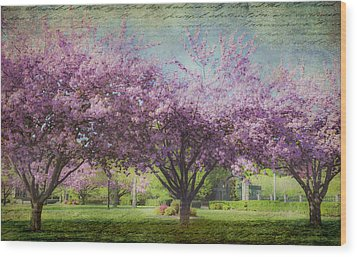 Cheery Cherry Trees - Nostalgic Wood Print