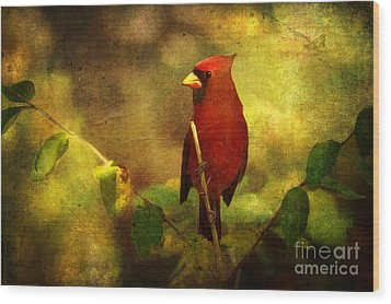 Cheery Red Cardinal  Wood Print by Lianne Schneider