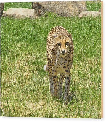 Wood Print featuring the photograph Cheetah Approaching by CML Brown
