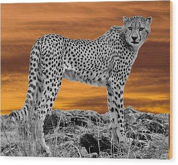 Cheetah At Dusk Wood Print by Larry Linton
