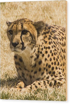 Wood Print featuring the photograph Cheetah by Cathy Donohoue