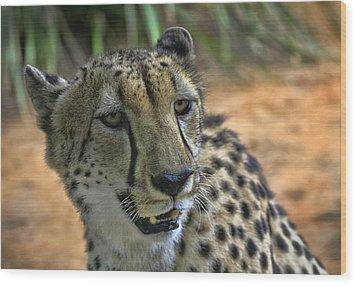 Cheetah Wood Print by Kim Andelkovic
