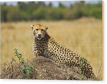 Cheetah Wood Print by Kongsak Sumano