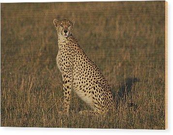 Cheetah On Savanna Masai Mara Kenya Wood Print