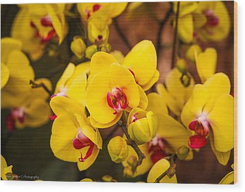 Wood Print featuring the photograph Chelsea Yellow by Ross Henton