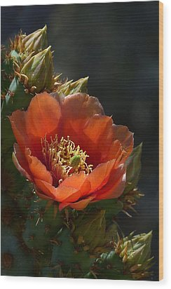 Wood Print featuring the photograph Chenille Prickly Pear Bloom And Buds by Cindy McDaniel
